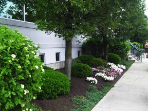 Big C Lawn and Landscaping - Commercial Landscaping, Mulch & Spring Cleanup, 2014 - 13