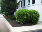 Big C Lawn and Landscaping - Commercial Landscaping, Mulch & Spring Cleanup, 2014 - 19