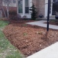 Big C Lawn and Landscaping - Pine Straw Mulch Job, 2014 - 42
