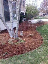 Big C Lawn and Landscaping - Pine Straw Mulch Job, 2014 - 43