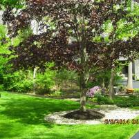 Big C Lawn and Landscaping - Mulch and River Rock, Spring Cleanup, 2015 - 73