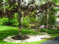 Big C Lawn and Landscaping - Mulch and River Rock, Spring Cleanup, 2015 - 74